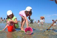 Pêche aux coques plages de Normandie