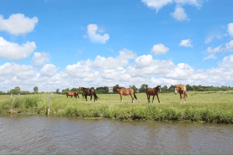 chevaux marais cotentin