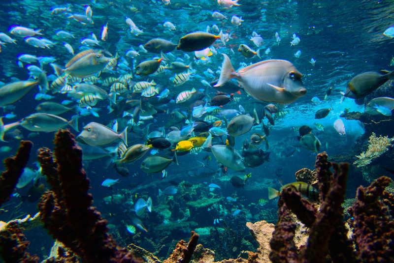 cite de la mer fonds marin