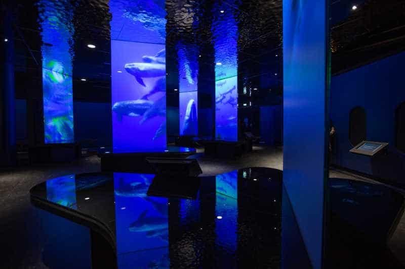 la cite de la mer aquarium