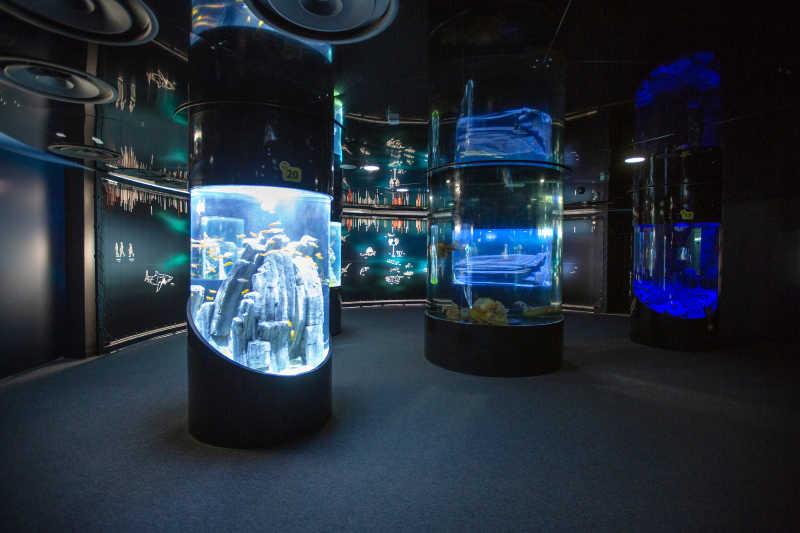 la cite de la mer l'ocean du futur aquariums